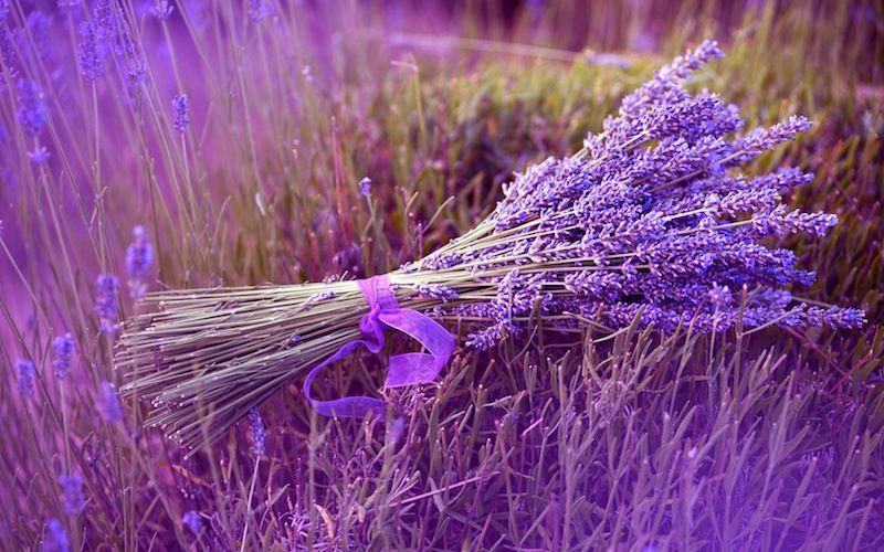 culture-lavande-estuces-deco-bouquet-lavande-ruban-violet